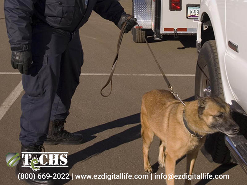 explosive sniffing dogs